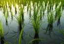 Bendungan Bintang Bano Solusi Pengairan Pertanian KSB